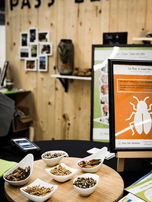 Pass-Zen Services - Animations gustatives bar à insectes en entreprise