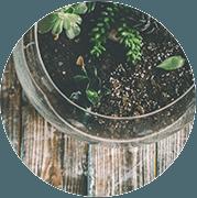 Pass-Zen Services - Atelier terrarirum en entreprise